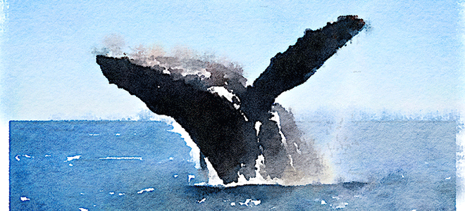 whale_watercolor_blog