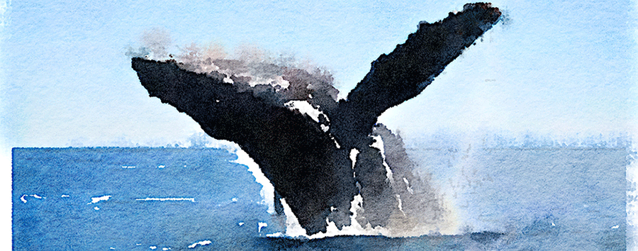 whale_watercolor_fullwidthsml